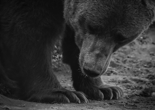 lesní medvěqd.jpg