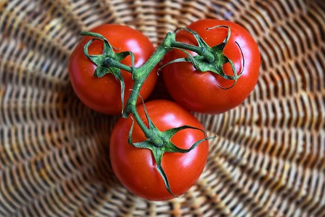 rajčata.jpg