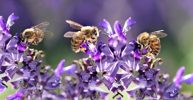 včely.jpg