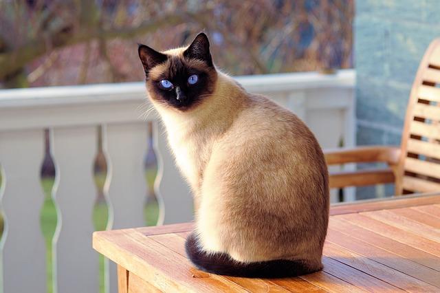 Mačka na stole.jpg