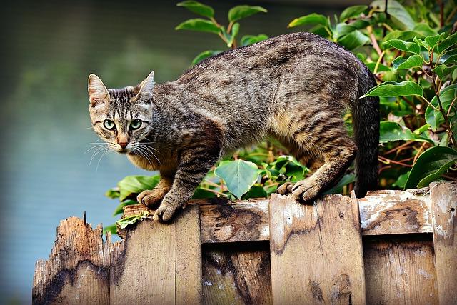 Mačka na plote.jpg