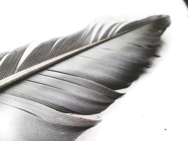 Detail na vtáčie pierko.jpg